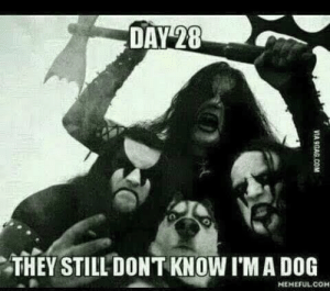 Day 28 They Have No Idea: DAY 28  THEY STILL DONT KNOW I'M A DOG  HEMEFUL COM  VIA 9GAG.COM Day 28 They Have No Idea