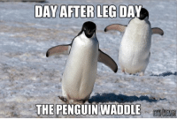 Dat feel.. always worth the pain though!   Gym Memes: DAY AFTER LEG DA  THE PENGUIN WADDLE Dat feel.. always worth the pain though!   Gym Memes