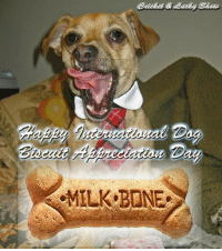Happy International Biscuit Appreciation Day!  Woo hoo!  This is one Holiday I can really sink my teeth into!  (Pun intended!) BOL! ;): Day Happy International Biscuit Appreciation Day!  Woo hoo!  This is one Holiday I can really sink my teeth into!  (Pun intended!) BOL! ;)