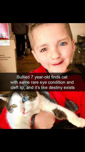 Destiny, Old, and Wholesome: DAY  JOURD'HUI1  LOS HOY  Bullied 7 year-old finds cat  with same rare eye condition and  cleft lip, and it's like destiny exists Sans is a very wholesome Boi