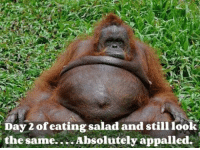 Appalled, Dank, and 🤖: Day of eating salad and still look  the same... Absolutely appalled.