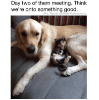 Memes, Reddit, and Good: Day two of them meeting. Think  we're onto something good.  (Pic: Reddit u/herwiththetwodogs) (@dogsbeingbasic) is my source for adorable doggos and puppers.