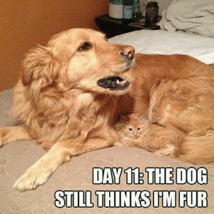 Animals, Dogs, and Memes: DAY12 THE DOG  STILL THINKS UM FUR Dog Memes Of The Day 32 Pics – Ep28 #dogs #dogmemes #memes#lovelyanimalsworld - Lovely Animals World