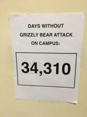 School, Tumblr, and Bear: DAYS WITHOUT  GRIZZLY BEAR ATTACK  ON CAMPUS:  34,310 memehumor:  School trolls new Education Secretary Betsy DeVos with a hilarious sign.