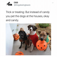 Candy, Dogs, and Memes: DBB  DBB @Dogsbeingbasic  Trick or treating: But instead of candy  you pet the dogs at the houses, okay  and candy Fine, candy too. But mainly doggos.