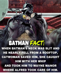 The bat and the cat. Fact by @dailygeekfacts dc dccomics dceu dcu dcrebirth dcnation dcextendeduniverse batman superman manofsteel thedarkknight wonderwoman justiceleague cyborg aquaman martianmanhunter greenlantern theflash greenarrow suicidesquad thejoker harleyquinn comics injusticegodsamongus: DC NATION UNIVERSE  BATMAN FACT  WHEN BATMAN'S NECK WAS SLIT AND  HE NEARLY FELL FROM A ROOFTOP,  CATWOMAN SAVED HIM, SHE CAUGHT  HIM WITH HER WHIP  AND TOOK HIM TO WAYNE MANOR  WHERE ALFRED TOOK CARE OF HIM, The bat and the cat. Fact by @dailygeekfacts dc dccomics dceu dcu dcrebirth dcnation dcextendeduniverse batman superman manofsteel thedarkknight wonderwoman justiceleague cyborg aquaman martianmanhunter greenlantern theflash greenarrow suicidesquad thejoker harleyquinn comics injusticegodsamongus