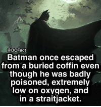 Batman, Memes, and Oxygen: @DCFact  Batman once escaped  from a buried coffin even  though he was badly  poisoned, extremely  low on oxygen, and  in a straitjacket. Sounds fun 😛🦇