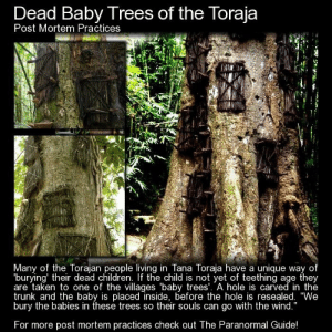 """RT @REALLlFEHEROES: https://t.co/fyXm3XtrG0: Dead Baby Trees of the Toraja  Post Mortem Practices  Many of the Torajan people living in Tana Toraja have a unique way of  burying' their dead children. If the child is not yet of teething age they  are taken to one of the villages 'baby trees'. A hole is carved in the  trunk and the baby is placed inside, before the hole is resealed. """"We  bury the babies in these trees so their souls can go with the wind.""""  For more post mortem practices check out The Paranormal Guide! RT @REALLlFEHEROES: https://t.co/fyXm3XtrG0"""