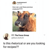 Memes, Precious, and Focus: DeadyNightshadeo  @231Tally  How can u eat these precious  creatures?????  YT: The Focus Group  @ManLikeKofi  Is this rhetorical or are you looking  for recipes?? 😂🤣Legendary