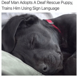 A truly great guy: Deaf Man Adopts A Deaf Rescue Puppy,  Trains Him Using Sign Language A truly great guy