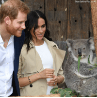 Prince Harry and Meghan, Duchess of Sussex got to meet Ruby, a mother Koala, at the @tarongazoo in Sydney, Australia. Ruby has a joey named after the Duchess, and the zoo is home to another joey, named after Prince Harry. Monday, @theroyalfamily announced the Duke and Duchess are expecting their first child in the spring.: Dean Lewins/Pool via AP Prince Harry and Meghan, Duchess of Sussex got to meet Ruby, a mother Koala, at the @tarongazoo in Sydney, Australia. Ruby has a joey named after the Duchess, and the zoo is home to another joey, named after Prince Harry. Monday, @theroyalfamily announced the Duke and Duchess are expecting their first child in the spring.
