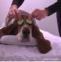 Dank, 🤖, and Fun: dean the basset Spa day fun day!  by Dean The Basset