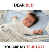 Love, Memes, and True: DEAR  BED  YOU ARE MY TRUE LOVE