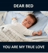 Memes, 🤖, and True Love: DEAR BED  YOU ARE MY TRUE LOVE one love <3