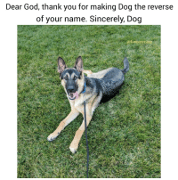 9gag, Animals, and Dogs: Dear God, thank you for making Dog the reverse  of your name. Sincerely, Dog  ofunpawcar What are you grateful for today?? GodDog 💓@funpawcare New link in bio updated often with all of our expert recommended Dog Training, Behavior, Nutrition, & Pet Care products. Recommended by experts, for parents! dogtraining puppylove dogpark doglover puppies puppy pupper puppiesofinstagram dogstagram dogs dog god love dogsofinstagram 9gag buzzfeed newpuppy newdog doglove doglovers furbaby venice venicebeach la cali california losangeles santamonica Malibu beverlyhills @9gag @barked @buzzfeed @buzzfeedanimals @ladbible @unilad @theellenshow @barstoolsports @cbsla @lnsta_dogs @dogsofinstagram @instagram @dogsbeingbasic @dogs @failsclip @funnyfailvideos @fun_bestvids @lol_vines @bestvidsnow @failsvids @animals.co @thedodo @boopmynose @dogsofinstaworld @pups @pawz @puppystagrams @animal_unity @dogs.lovers @animalove.co @cutepetclub @puppyscene @campingwithdogs @bestvinesnow @pupflix