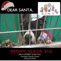 Family, Memes, and Exercise: DEAR SANTA,  STORM NEEDS YOU  She is URGENT at the FULL  Trumbull County Pound  (330) 675-2787 URGENT!!  💗💜💗 My name is STORM. My family said they couldn't keep me any longer which I don't understand. I am looking for an active family to exercise and play with me, maybe an occasional treat and lots of snuggle time BUT I want forever this time please and I want to have all of the attention.  MUST BE ONLY PET IN HOME. Storm is a much happier girl being on the outside of her cage with you. (Storm is a female.) She is SPONSORED for her adoption fee as well as donations toward her vetting to an approved rescue or adopter.  PLEASE HELP US SAVE STORM.  She is at the Trumbull County Pound, 7501 Anderson Ave., Warren, Oh (330) 675-2787.-Tonya