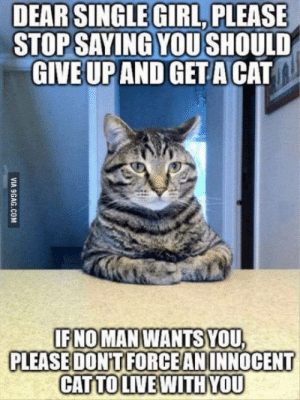 Cats, Girl, and Single: DEAR SINGLE GIRL, PLEASE  STOP SAYING YOU SHOULD  AND GET A CAT  GIVE UP  IFNOMAN WANTS YOU  PLEASE DONTIFORCEANINNOCENT  CATTOLIVEWITHYOU On behalf of cats