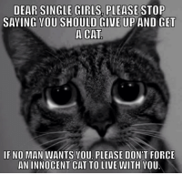 Cats, Girls, and Memes: DEAR SINGLE GIRLS PLEASE  SAYING YOU SHOULD GIVE UP AND GET  A CAT  IF NO MAN WANTS VOU PLEASE DON'T FORCE  AN INNOCENT CAT TO LIVE WITH YOU.