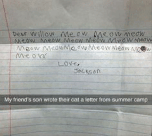 Friends, Summer, and Heart: Dear willow Me dw e ow meaw  me on  LOX  My friend's son wrote their cat a letter from summer camp 46 Heart-Warming Moments That Will Bring You Joy
