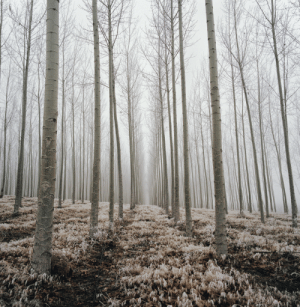 death-by-elocution: the ghostly quiet of winter. photo by Danielle Nelson : death-by-elocution: the ghostly quiet of winter. photo by Danielle Nelson