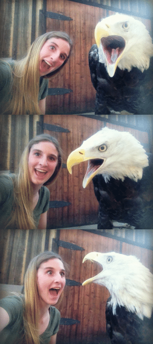 death-by-lulz: How to take selfies with a bald eagle.: death-by-lulz: How to take selfies with a bald eagle.