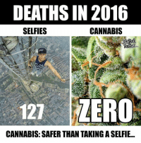 Memes, 🤖, and Butters: DEATHS IN 2016  CANNABIS  SELFIES  Butter  127 ZERO  CANNABIS: SAFER THAN TAKINGASELFIE facts