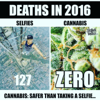 Memes, Bong, and 🤖: DEATHS IN 2016  CANNABIS  SELFIES  Butter  COD  121 ZERO  CANNABIS: SAFER THAN TAKING ASELFIE Aint that some shit @marijuanasaferthanaselfie ➡️ Follow @Dagenius_Jay33 FOR MORE tag 3 friends to see this! dageniuscomedy bud legalize bong marijuana dank Weed sativa weedgram weedstagram