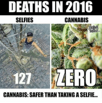 Memes, 🤖, and Mod: DEATHSIN 2016  SELFIES  CANNABIS  Butter  121 ZERO  CANNABIS: SAFER THAN TAKINGASELFIE... Put down the phones and pick up the bud😂🔥💯 ➖ Team page - @Rize_Above.All ➖ Follow my other account 👉 @Zergo_OG ➖ The funniest guy ever @Rize.jdoh ➖ Co Leader @RiZe.xnuclear ➖ Turn on post notifications ➖ Don't mind these tags 😂🚫 CallofDuty xbox xboxOne BlackOps2 BlackOps3 BlackOps gamer playstation iw advancedWarfare xbox360 bo1 bo2 bo3 wiiU videoGames games InfiniteWarfare like4like cod4remastered GTAV csgo ps4 rhg modding pokemon gta5
