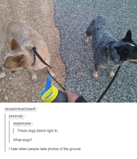 Sixpenceeee: decadentnachowolf  jonomaly  Sixpenceee  These dogs blend right in  What dogs?  I hate when people take photos of the ground