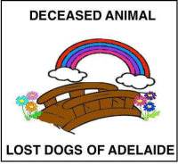 Dogs, Family, and Memes: DECEASED ANIMAL  LOST DOGS OF ADELAIDE DECEASED CAT Hampstead Gardens #Adelaide 22/10/18 Sadly there is a deceased cat on Manningham Road, opposite the barracks. It was a brown/black with 2 white patches on the tummy and a white patch on the chest. Also had 4 white paws. Medium length hair and little bit longer on the tail. Unsure of sex. We moved he/she to the curb and door knocked all 4 of the nearest houses and no one claimed it. It appeared healthy and well fed so we think there is a family looking for them. RIP little one