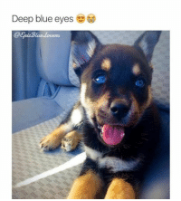 Funny, Blue, and Blues: Deep blue eyes  @Eric Blue-louens