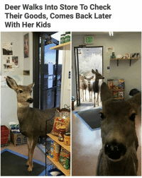 Deer, Memes, and News: Deer Walks Into Store To Check  Their Goods, Comes Back Later  With Her Kids  EXIT  ETSET The news I like | Follow @aranjevi for more!