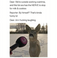 @hilarious.ted is my favorite animal memes page: Deer:We're outside working overtime,  and this fat ass has the NERVE to stop  for milk & cookies  Reporter: By himself? That's kinda  funny lol  Deer: AmI fucking laughing  G: TheFunnyintrovert @hilarious.ted is my favorite animal memes page