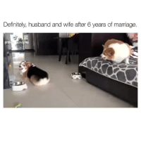 Definitely, Lmao, and Marriage: Definitely, husband and wife after 6 years of marriage.  262080 <p>Lmao 😂<br/></p>