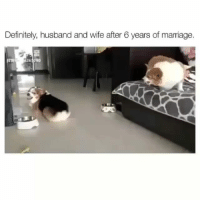 Definitely, Funny, and Marriage: Definitely, husband and wife after 6 years of marriage.  265080 😂🎯 funniest15 viralcypher funniest15seconds