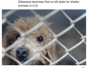 Wholesome news :): Delaware becomes first no-kill state for shelter  animals in U.S Wholesome news :)