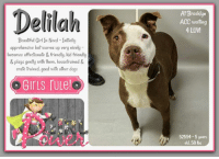 Being Alone, Apparently, and Beautiful: Delilah  At Brooklyn  ACC waiting  4 LUV  Beautiful Girl In Need Initially  apprehensive but warms up very nicely  becomes affectionate & friendly, kid friendly  & plays genty with them, housetrained &  crate trained, good with other dogs  over  52554-5 years  old. 58 lbs **** TO BE KILLED - 1/18/2019 ****  SUCH A BEAUTIFUL GIRL IN NEED - Her owner travels a lot and does not have time. Please help Delilah find a new best friend with time for her. :( Whether its her strikingly pretty face, bold markings or swift intelligence, Delilah knows how to attract attention. We've heard the stories over and over of how the owners have no time etc. but what we sometimes fail to recognize is that these helpless souls would give their last breath to be with those they love. This is the case with Delilah. As noted, she entered the shelter friendly, and wiggly to all. Though once she realized she was being abandoned, she vocalized her feelings. Now homeless, and in a cell, she arranges her belongings to comfort her, cries out, and is wary of any visitors. Delilah is a seasoned, healthy and attractive girl of 5 years old, gifted with intelligence. Her owner left a bio that would impress anyone. Her intellect warns her of the imminent danger she is about to face, and leaves her wary of strangers. The shelter has noted that once she is acquainted, she warms up. We are so hoping this attribute, along with her prior owner's declaration will lead someone to fall in love with her and give her the second chance at a forever home. Time is not on her side, for anyone interested in fostering or adopting, please message this page now.  DELILAH@BROOKLYN ACC Hello, my name is Delilah My animal id is #52554 I am a female brown dog at the  Brooklyn Animal Care Center The shelter thinks I am about 5 years old, 58 lbs Came into shelter as owner surrender Jan. 13, 2019 Reason Stated: OTHER  Delilah is rescue only   Delilah was placed at risk due to behavioral concerns; Delilah is difficult to remove from the kennel, lunging and snapping, she appears to be uncomfortable and has allowed minimal handling from her caretakers. She has been observed to escalate rapidly upon direct approach or contact, we believe she may be best set up to succeed if placed with an experienced rescue partner at this time. She is otherwise Healthy.  My medical notes are... Weight: 58 lbs Vet Notes 13/01/2019 DVM Intake Exam Estimated age: 5 years according to o  Microchip noted on Intake? negative History : o/s Subjective: BARH Observed Behavior - easily leashed but once muzzled started growling, hard stare, and lunging Evidence of Cruelty seen - no Evidence of Trauma seen - no Objective  P = wnl  R = eupneic  BCS 6/9 EENT: Eyes clear, ears clean, no nasal discharge noted Oral Exam: muzzled PLN: No enlargements noted H/L: NSR, NMA, CRT < 2, Lungs clear, eupneic ABD: Non painful, no masses palpated U/G: FI, no MGTs, no vulvar d/c MSI: Ambulatory x 4, skin free of parasites, no masses noted, healthy hair coat CNS: mentation appropriate - no signs of neurologic abnormalities  Assessment:Apparently healthy Plan: Continue to monitor while at BACC Prognosis: Excellent SURGERY: ok to schedule for surgery  Details on my behavior are... Behavior Condition: 4. Orange  Behavior History Behavior Assessment Delilah approached counselor with a loose body. When attempting to scan for a chip, when counselor got behind the neck Delilah snapped at counselors hand and immediately released. Further handling was done by owner. In the kennel she rearranges her blanket and barks and whines, until settling down. When approached in kennel her lip curls, she gets up and greets counselor, she begins sniffing kennel door and begins growling, after about a minute she begins whining and barking  Date of Intake: 1/13/2019  Basic Information:: Delilah is an approximately 5 year old female. She is a brown and white large mixed breed. Her previous owner has had her for about 5 years. She is in our care as her previous owners would be travelling for long periods of time.  Previously lived with:: 2 adults  How is this dog around strangers?: Delilah will growl and bark at first. But once she is introduced she becomes affectionate and friendly.  How is this dog around children?: Delilah has spent time around children aged 4 and 5 years old. Around them she is relaxed and playful, she would play in a gentle way.  How is this dog around other dogs?: Delilah has spent time around dogs of all sizes and ages. Around them she is playful and respectful. She would play in a gentle way.  How is this dog around cats?: Behavior around cats is unknown  Resource guarding:: Delilah allows for her food and water bowls to be touched, if attempting to take a toy from her, she thinks its a game and will start tugging at the toy.  Bite history:: Delilah has not bitten or scratched previous family  Housetrained:: Yes  Energy level/descriptors:: high, affectionate, playful  Other Notes:: Delilah doesn't mind being held or disturbed while she is sleeping. She isn't bothered by receiving baths or having her coat brushed. Her previous owner has not attempted to cut her nails so behavior is unknown. If someone unfamiliar approaches you or the house she would bark and growl.  Has this dog ever had any medical issues?: No  Medical Notes: there are no known medical concerns noted at the time of intake  For a New Family to Know: Delilah is described as an affectionate and playful gal. In the home she will follow you around or be in the same room as you. She will ply with anything she can find, she loves playing with hats. She was fed a dry food diet of no particular brand along side with human food. If left home or in the yard alone she is well behaved. She does well in a crate for about 8 hours. She knows the commands sit and come. For exercise she enjoyed playing in the yard.  Date of intake:: 1/13/2019 Spay/Neuter status:: No Means of surrender (length of time in previous home):: Owner surrender Previously lived with:: 2 adults Behavior toward strangers:: Growls, barks though may warm up Behavior toward children:: Relaxed, playful with familiar children Behavior toward dogs:: Playful, respectful Behavior toward cats:: Unknown Resource guarding:: None reported Bite history:: None reported Housetrained:: Yes Energy level/descriptors:: Affectionate, playful with a high energy level  Date of assessment:: 1/15/2019  Summary:: Unable to SAFER due to behavior concerns: Delilah is difficult to remove from the kennel, lunging and snapping, she appears to be uncomfortable and has allowed minimal handling from her caretakers. Out of concern for her stress levels and her response to restraint, we feel Delilah is not a great candidate for a handling assessment at this time. Please see her owner surrender profile for a full summary of her behavior in her previous home.   Summary:: According to Delilah's previous owner, Delilah has spent time around dogs of all sizes and ages. She is playful and respectful and engages in gentle play.  1/14: When off leash at the Care Centers, Delilah approached the gate with a stiff posture when the greeter was near the gate door. Handlers attempted to place a collar but ceased when Delilah displayed a stiff, frozen posture.  Date of intake:: 1/13/2019  Summary:: Loose bodied initially, bit counselor on hand when reached over neck though did not break skin  Date of initial:: 1/13/2019  Summary:: Growling, hard staring, lunging  BEHAVIOR DETERMINATION:: New Hope Only  Behavior Asilomar: TM - Treatable-Manageable  Recommendations:: No children (under 13),Place with a New Hope partner  Recommendations comments:: Because Delilah has been observed to escalate rapidly upon direct approach or contact, we believe she may be best set up to succeed if placed with an experienced rescue partner. We also advise safe and appropriate management of Delilah and allow her to interact at her own pace. Force-free, reward based training is advised when introducing or exposing her to new and unfamiliar situations.  Potential challenges: : Handling/touch sensitivity,Fearful/potential for defensive aggression,Bite history (human)  DELILAH IS RESCUE ONLY…..TO SAVE THIS PUP YOU MUST FILL OUT APPLICATIONS WITH AT LEAST 3 NEW HOPE RESCUES. PLEASE HURRY!!!   IF YOU CAN FOSTER OR ADOPT THIS PUP, PLEASE PM OUR PAGE FOR ASSISTANCE. WE CAN PROVIDE YOU WITH LINKS TO APPLICATIONS WITH NEW HOPE RESCUES WHO ARE CURRENTLY PULLING FROM THE NYC ACC.  PLEASE SHARE THIS DOG FOR A HOME TO SAVE HER LIFE.