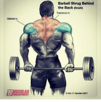 fitness: Deltoid m  Barbell Shrug Behind  the Back finish)  Trapezius m.  OWm P. Hamiton 2011 fitness