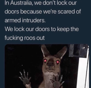 dem killer roos by Shrek_o MORE MEMES: dem killer roos by Shrek_o MORE MEMES