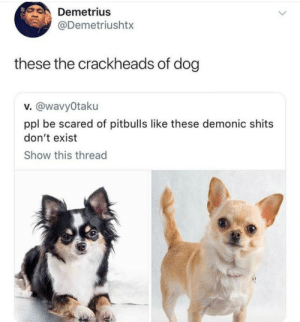 Shit, Dog, and Ppl: Demetrius  @Demetriushtx  these the crackheads of dog  v. @wavyOtaku  ppl be scared of pitbulls like these demonic shits  don't exist  Show this thread They always be up to some shit