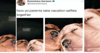 Dogs, Fresh, and Funny: Demetrius Harmon  @meechonmars  how yo parents take vacation selfies  together Get ready for some fresh, belly rubbin' good doggo memes! You deserve it!#dogs # funy dogs # dog memes # funny memes # animal memes