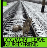 Now that's loyalty! How many people do you know what would get run over for you?! DETAILS: https://on.rt.com/7yz9: DEN  DOG WONT LEAVE  INJURED FRIEND Now that's loyalty! How many people do you know what would get run over for you?! DETAILS: https://on.rt.com/7yz9
