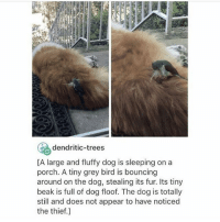 J U S T I C E - Max textpost textposts: dendritic-trees  CA large and fluffy dog is sleeping on a  porch. A tiny grey bird is bouncing  around on the dog, stealing its fur. Its tiny  beak is full of dog floof. The dog is totally  still and does not appear to have noticed  the thief. J U S T I C E - Max textpost textposts