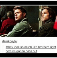 Memes, Supernatural, and Fandom: derek gayle:  #they look so much like brothers right  here im gonna pass out spn Supernatural spnfamily jaredpadalecki jensenackles mishacollins sam dean winchesters castiel destiel fandom ship otp