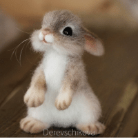 9gag, Animals, and Cute: Derevschikova These felt animals look so cute that I wish they were real. - By @derevschikova - felt feltanimals needlefelting 9gag
