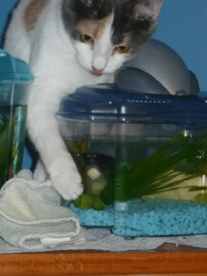 Derping for Fishy: Derping for Fishy