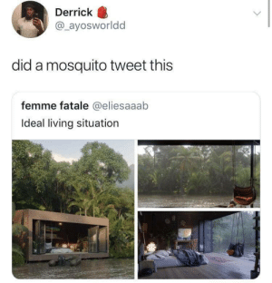 Living, Mosquito, and Tweet: Derrick  @_ayosworldd  did a mosquito tweet this  femme fatale @eliesaaab  Ideal living situation BzzZZzzzZZzz