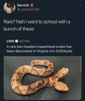 cnn.com, Dank, and Memes: Derrick  @_ayosworldd  Rare? Nah I went to school with a  bunch of these  CNN@CNN  A rare two-headed copperhead snake has  been discovered in Virginia cnn.it/2DApZei Uncommon rarity by Ayoeddy MORE MEMES