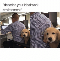 "Work, Girl Memes, and Next: ""describe your ideal work  environment"" First item on the agenda at next team meeting"