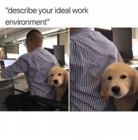 "Work, Girl Memes, and Answer: ""describe your ideal work  environment"" Is this an acceptable interview answer?"